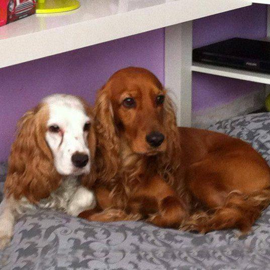 Paco e Daisy