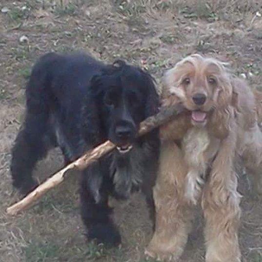 Charlie e Lady