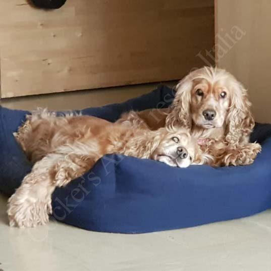 Ginger e Perla